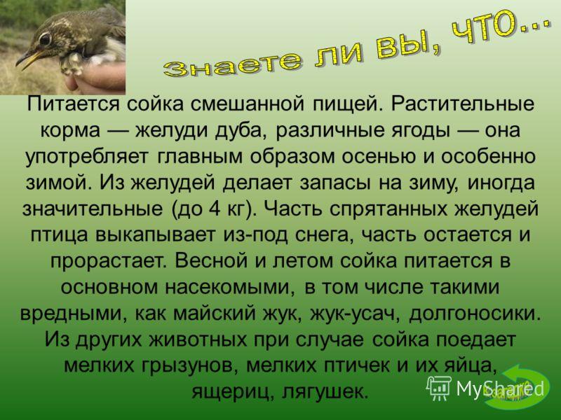 Питается сойка смешанной пищей. Растительные корма желуди дуба, различные ягоды она употребляет главным образом осенью и особенно зимой. Из желудей делает запасы на зиму, иногда значительные (до 4 кг). Часть спрятанных желудей птица выкапывает из-под
