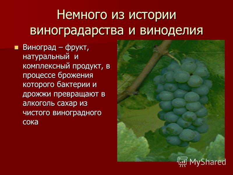 Немного из истории виноградарства и виноделия Виноград – фрукт, натуральный и комплексный продукт, в процессе брожения которого бактерии и дрожжи превращают в алкоголь сахар из чистого виноградного сока Виноград – фрукт, натуральный и комплексный про