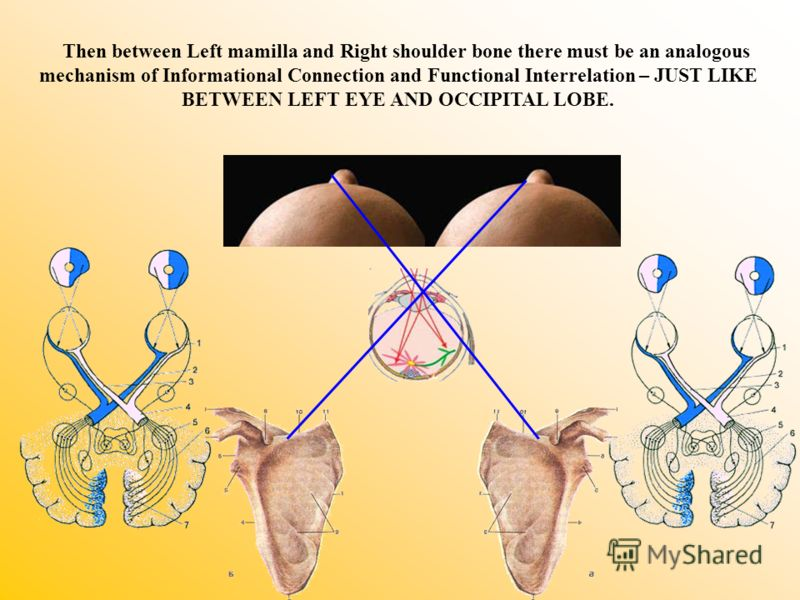 Then between Left mamilla and Right shoulder bone there must be an analogous mechanism of Informational Connection and Functional Interrelation – JUST LIKE BETWEEN LEFT EYE AND OCCIPITAL LOBE.