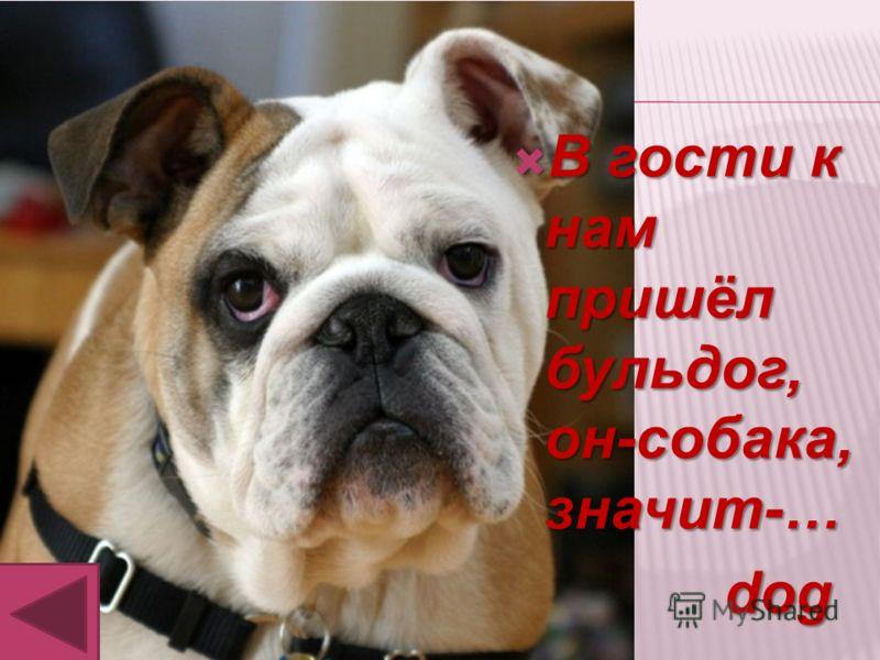 В гости к нам пришёл бульдог, он-собака, значит-… В гости к нам пришёл бульдог, он-собака, значит-… dog dog