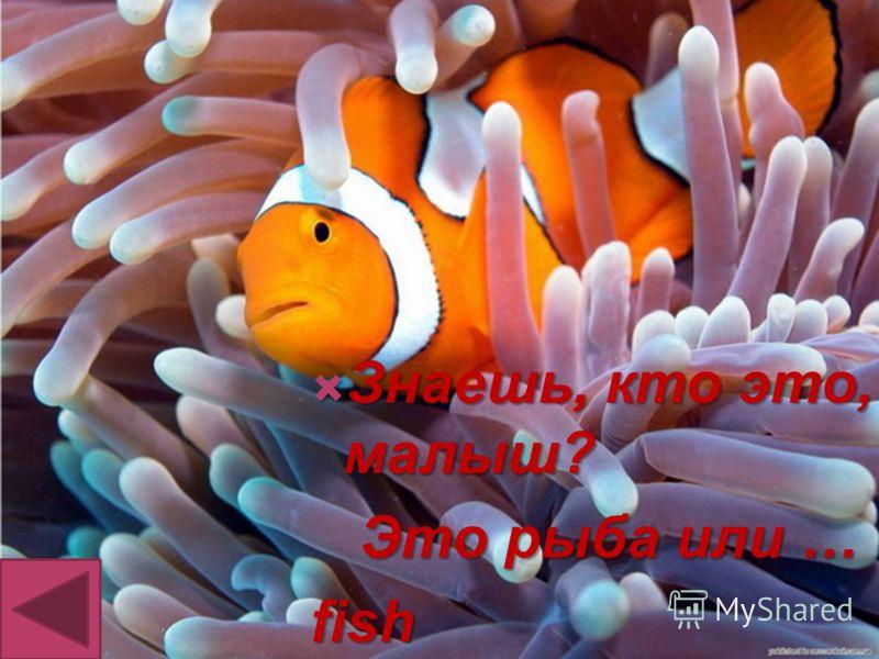 Знаешь, кто это, малыш? Знаешь, кто это, малыш? Это рыба или … Это рыба или …fish