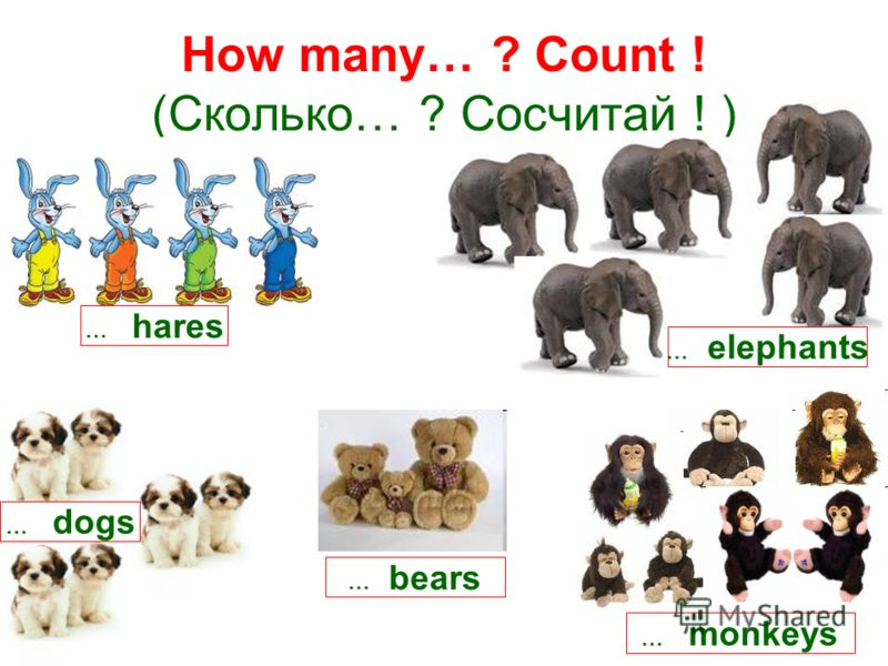 How many… ? Count ! (Сколько… ? Сосчитай ! ) … hares … monkeys … dogs … bears … elephants
