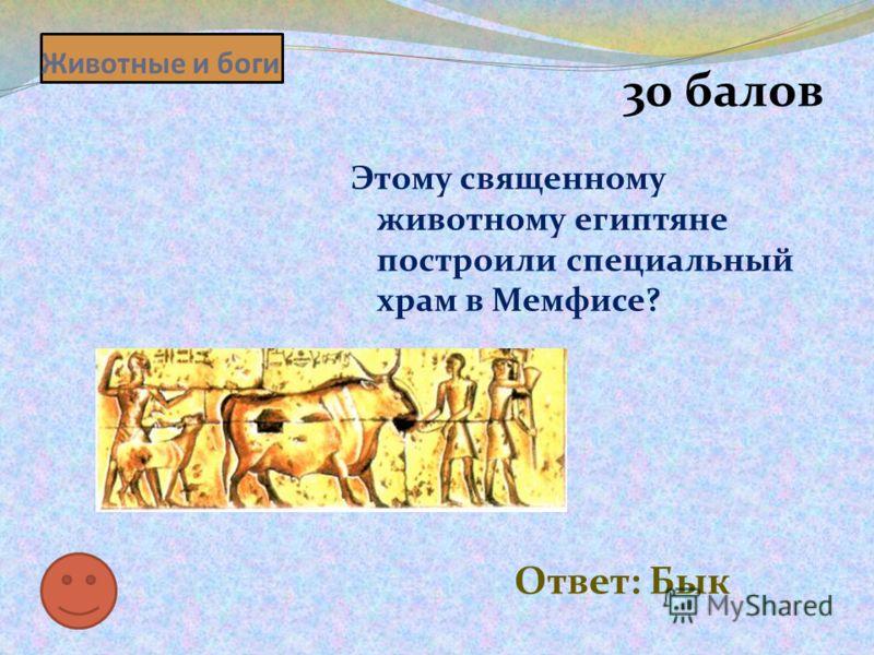 Животные и боги 30 балов Этому священному животному египтяне построили специальный храм в Мемфисе? Ответ: Бык