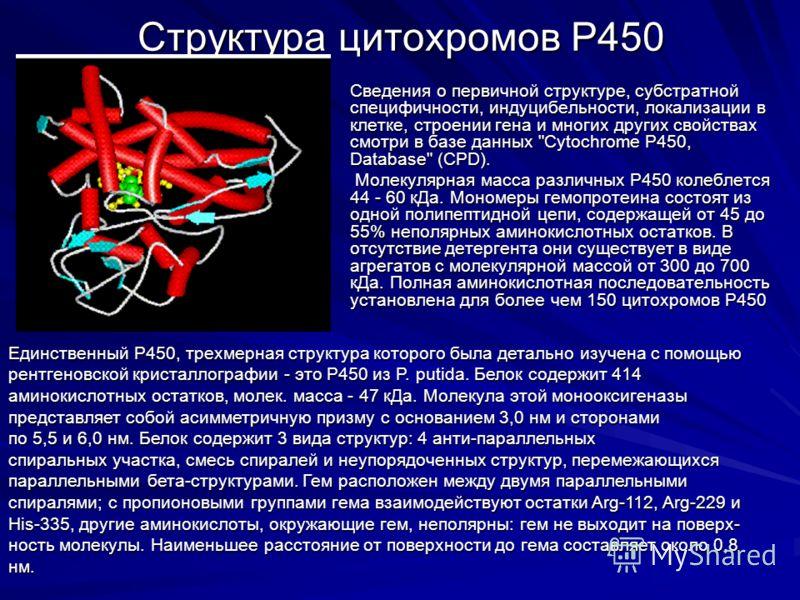 Структура цитохромов Р450 Сведения о первичной структуре, субстратной специфичности, индуцибельности, локализации в клетке, строении гена и многих других свойствах смотри в базе данных