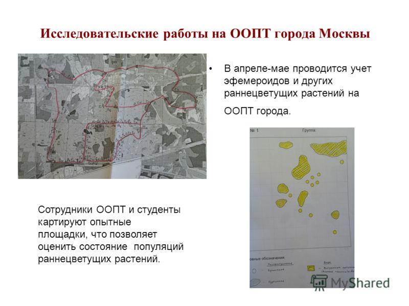 Исследовательские работы на ООПТ города Москвы В апреле-мае проводится учет эфемероидов и других раннецветущих растений на ООПТ города. Сотрудники ООПТ и студенты картируют опытные площадки, что позволяет оценить состояние популяций раннецветущих рас