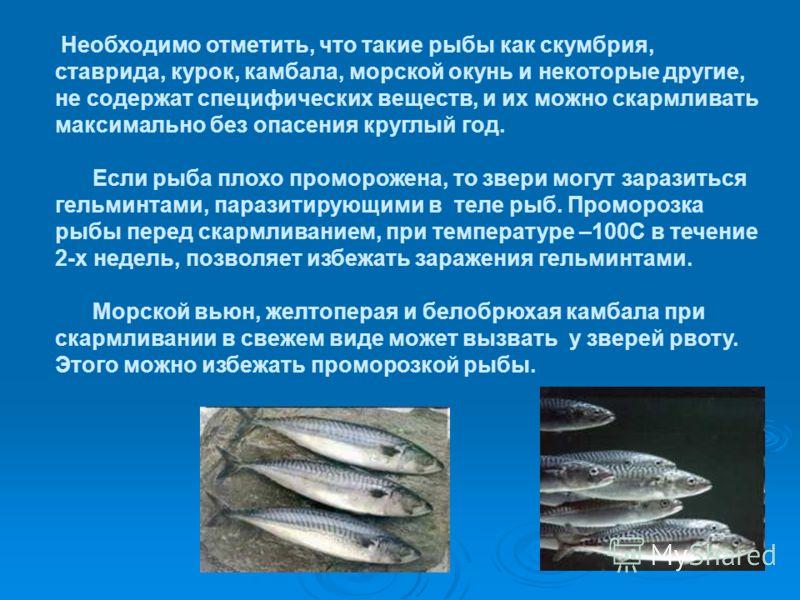 Необходимо отметить, что такие рыбы как скумбрия, ставрида, курок, камбала, морской окунь и некоторые другие, не содержат специфических веществ, и их можно скармливать максимально без опасения круглый год. Если рыба плохо проморожена, то звери могут