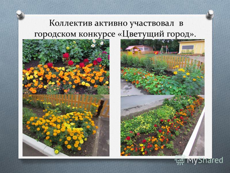 Коллектив активно участвовал в городском конкурсе «Цветущий город».