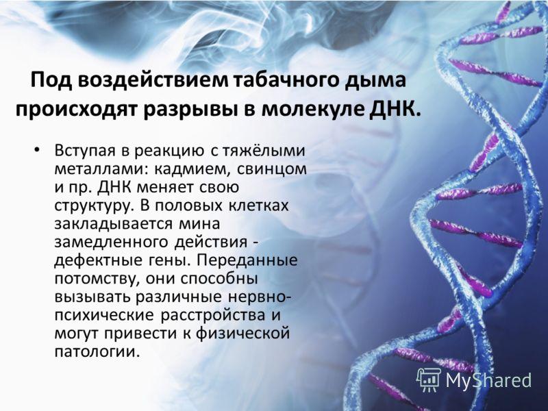 Под воздействием табачного дыма происходят разрывы в молекуле ДНК. Вступая в реакцию с тяжёлыми металлами: кадмием, свинцом и пр. ДНК меняет свою структуру. В половых клетках закладывается мина замедленного действия - дефектные гены. Переданные потом