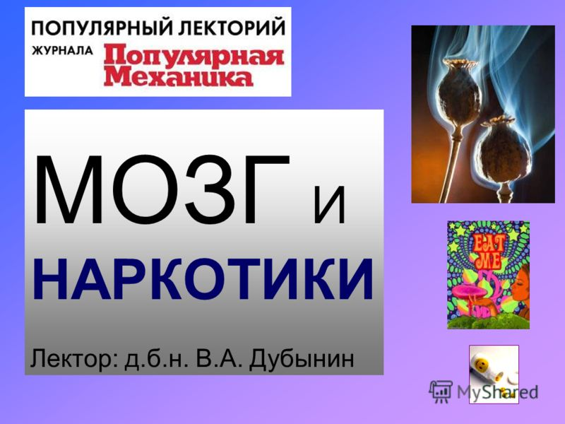 МОЗГ И НАРКОТИКИ Лектор: д.б.н. В.А. Дубынин