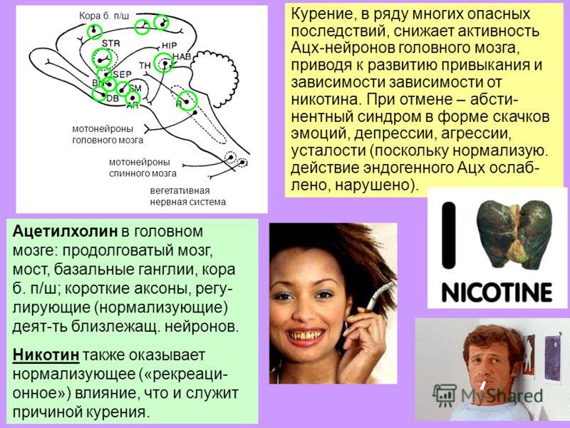 23 Ацетилхолин в головном мозге: продолговатый мозг, мост, базальные ганглии, кора б. п/ш; короткие аксоны, регу- лирующие (нормализующие) деят-ть близлежащ. нейронов. Никотин также оказывает нормализующее («рекреаци- онное») влияние, что и служит пр
