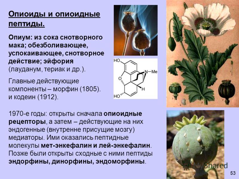 Опиоиды и опиоидные пептиды. Опиум: из сока снотворного мака; обезболивающее, успокаивающее, снотворное действие; эйфория (лауданум, териак и др.). Главные действующие компоненты – морфин (1805). и кодеин (1912). 1970-е годы: открыты сначала опиоидны