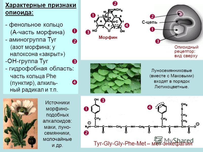 Характерные признаки опиоида: - фенольное кольцо (А-часть морфина) - аминогруппа Tyr (азот морфина; у налоксона «закрыт») -ОН-группа Tyr - гидрофобная область: часть кольца Phe (пунктир), алкиль- ный радикал и т.п. Tyr-Gly-Gly-Phe-Met – мет-энкефалин