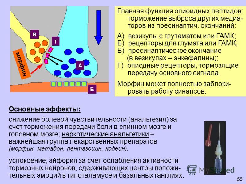 55 Б А В Г морфин Главная функция опиоидных пептидов: торможение выброса других медиа- торов из пресинаптич. окончаний: А) везикулы с глутаматом или ГАМК; Б) рецепторы для глумата или ГАМК; В) пресинаптическое окончание (в везикулах – энкефалины); Г)