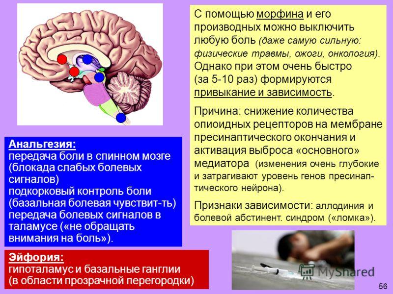 Анальгезия: передача боли в спинном мозге (блокада слабых болевых сигналов) подкорковый контроль боли (базальная болевая чувствит-ть) передача болевых сигналов в таламусе («не обращать внимания на боль»). С помощью морфина и его производных можно вык