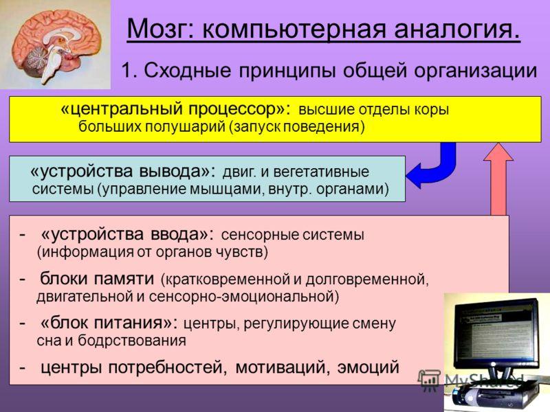 8 Мозг: компьютерная аналогия. 1. Сходные принципы общей организации «центральный процессор»: высшие отделы коры больших полушарий (запуск поведения) «устройства вывода»: двиг. и вегетативные системы (управление мышцами, внутр. органами) - «устройств