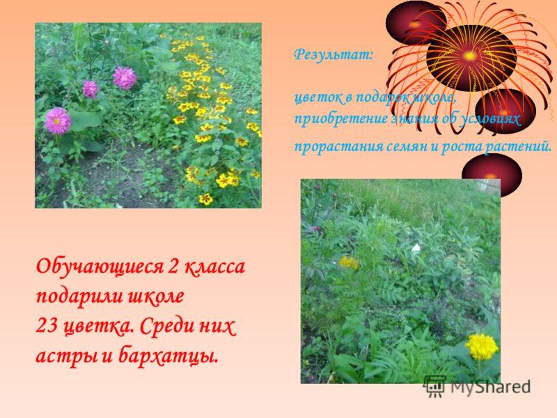 Результат: цветок в подарок школе, приобретение знания об условиях прорастания семян и роста растений. Обучающиеся 2 класса подарили школе 23 цветка. Среди них астры и бархатцы.