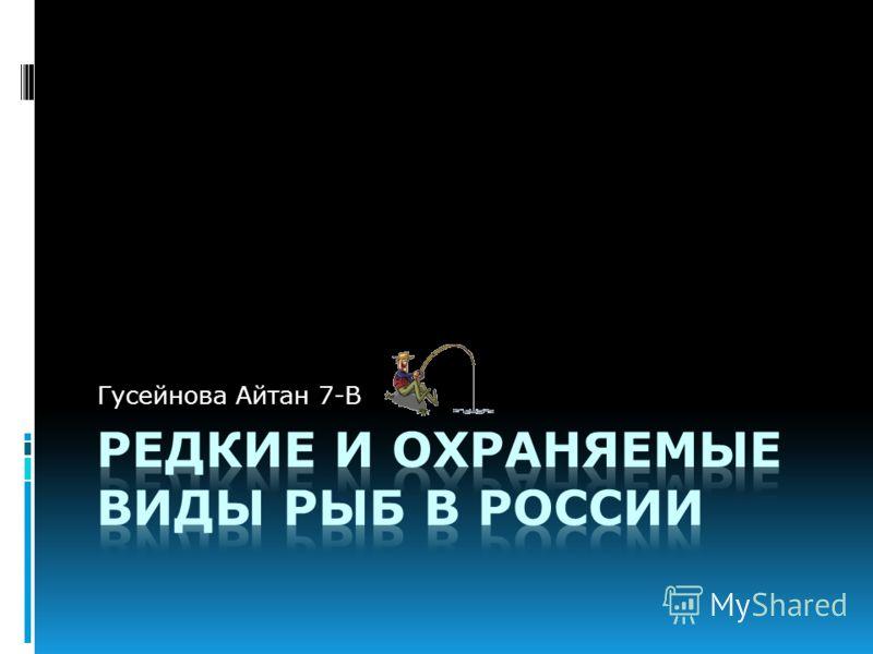 Гусейнова Айтан 7-В