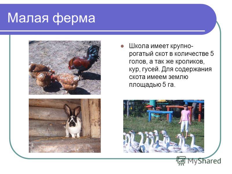 Малая ферма Школа имеет крупно- рогатый скот в количестве 5 голов, а так же кроликов, кур, гусей. Для содержания скота имеем землю площадью 5 га.