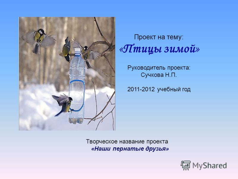 Проект на тему: «Птицы зимой» Руководитель проекта: Сучкова Н.П. 2011-2012 учебный год Творческое название проекта «Наши пернатые друзья»