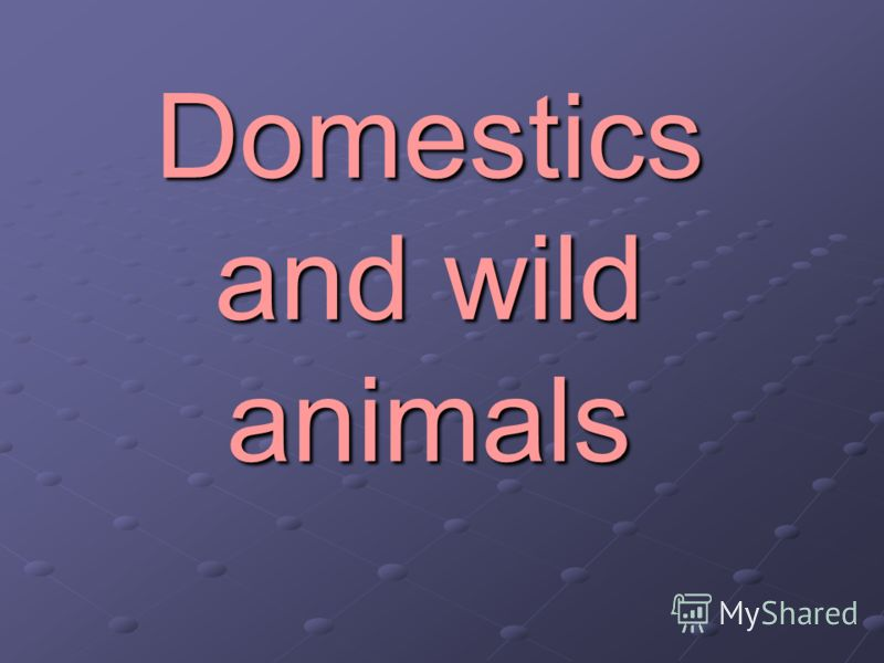 Domestics and wild animals