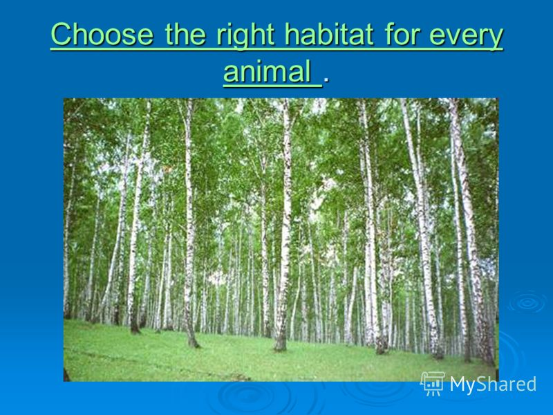 Choose the right habitat for every animal Choose the right habitat for every animal. Choose the right habitat for every animal