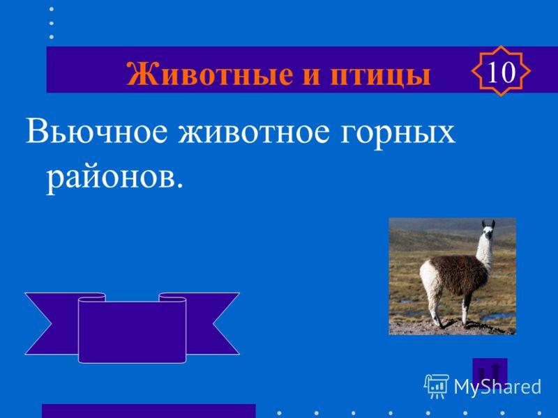 Животные и птицы 10 «Кот в мешке» Угадай, что в красном мешке.