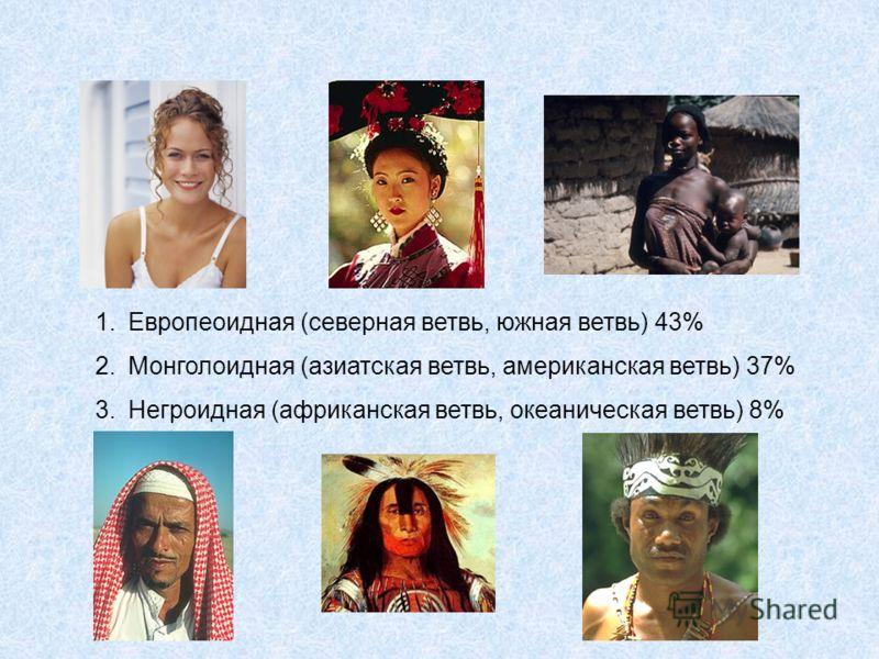 1.Европеоидная (северная ветвь, южная ветвь) 43% 2.Монголоидная (азиатская ветвь, американская ветвь) 37% 3.Негроидная (африканская ветвь, океаническая ветвь) 8%
