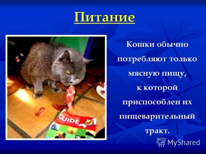 Питание Кошки обычно потребляют только мясную пищу, к которой приспособлен их пищеварительный тракт.