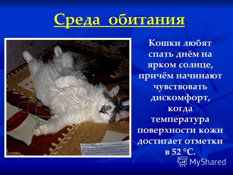 Среда обитания Кошки любят спать днём на ярком солнце, причём начинают чувствовать дискомфорт, когда температура поверхности кожи достигает отметки в 52 °C.