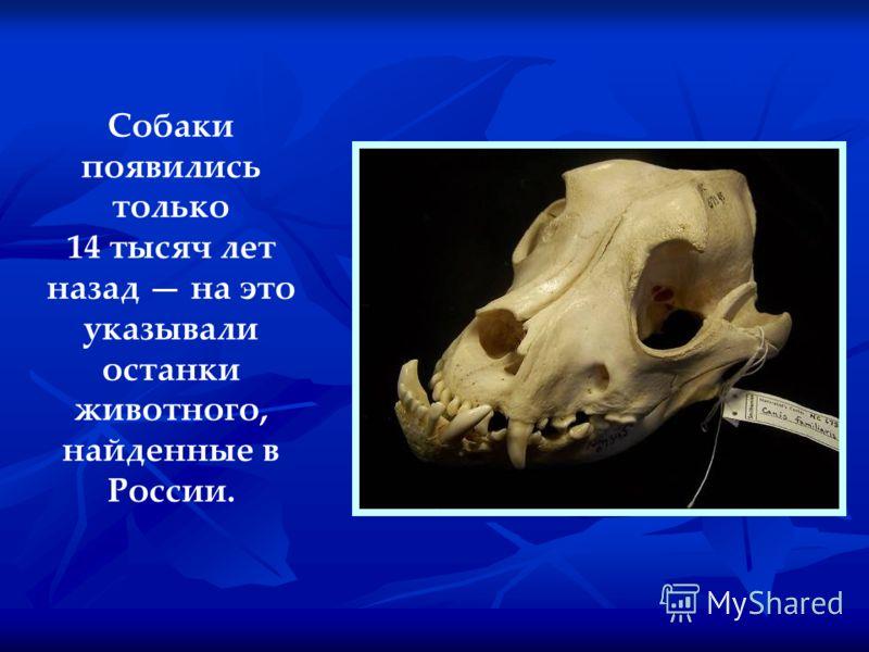 Собаки появились только 14 тысяч лет назад на это указывали останки животного, найденные в России.