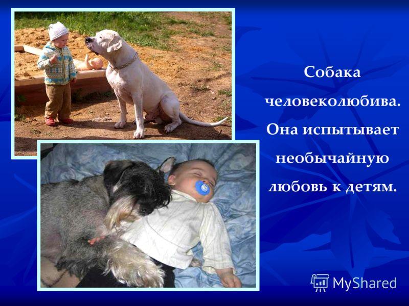 Собака человеколюбива. Она испытывает необычайную любовь к детям.