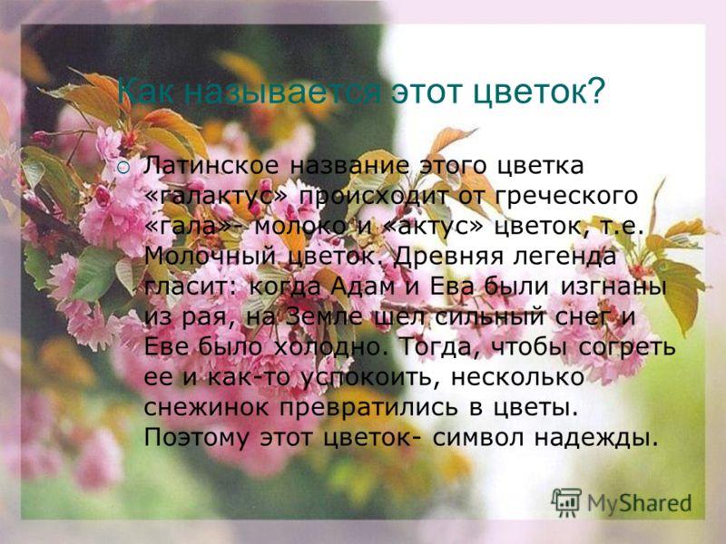 2 Раунд - биология Знаете ли вы цветы? Цветы, как люди, на добро щедры, и нежность, людям отдавали, как маленькие теплые костры.