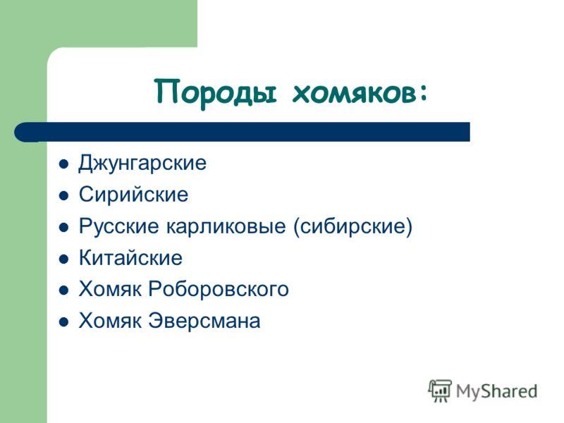 Породы хомяков: Джунгарские Сирийские Русские карликовые (сибирские) Китайские Хомяк Роборовского Хомяк Эверсмана