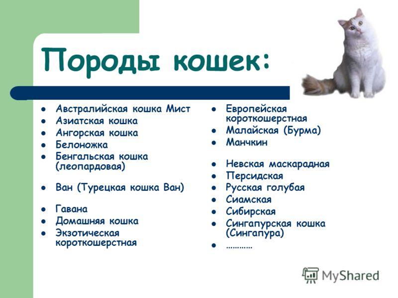 Породы кошек: Австралийская кошка Мист Азиатская кошка Ангорская кошка Белоножка Бенгальская кошка (леопардовая) Ван (Турецкая кошка Ван) Гавана Домашняя кошка Экзотическая короткошерстная Европейская короткошерстная Малайская (Бурма) Манчкин Невская