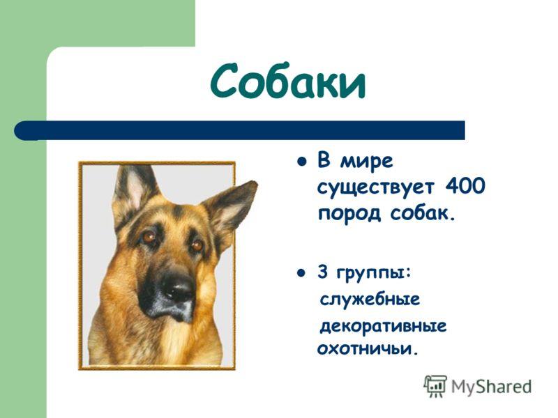 Собаки В мире существует 400 пород собак. 3 группы: служебные декоративные охотничьи.