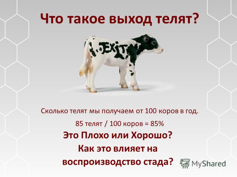 Что такое выход телят? Сколько телят мы получаем от 100 коров в год. 85 телят / 100 коров = 85% Это Плохо или Хорошо? Как это влияет на воспроизводство стада?