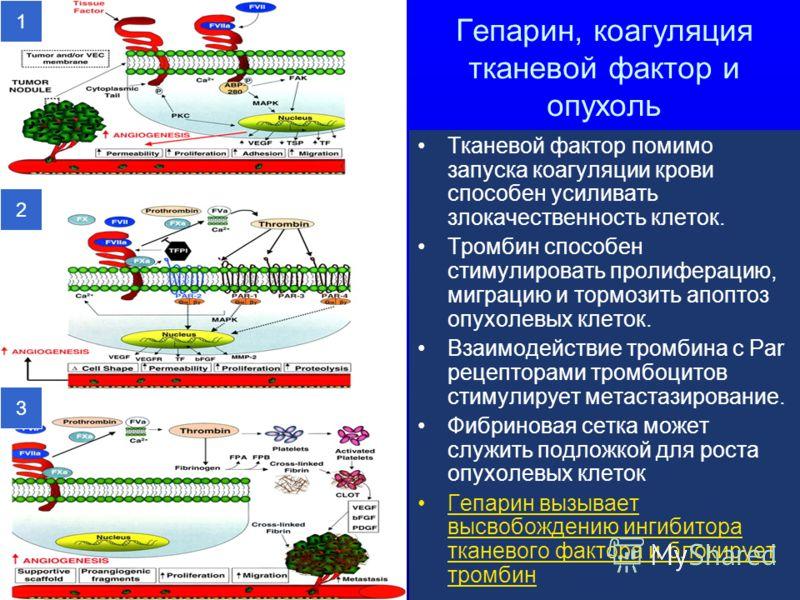 Гепарин, коагуляция тканевой фактор и опухоль Тканевой фактор помимо запуска коагуляции крови способен усиливать злокачественность клеток. Тромбин способен стимулировать пролиферацию, миграцию и тормозить апоптоз опухолевых клеток. Взаимодействие тро