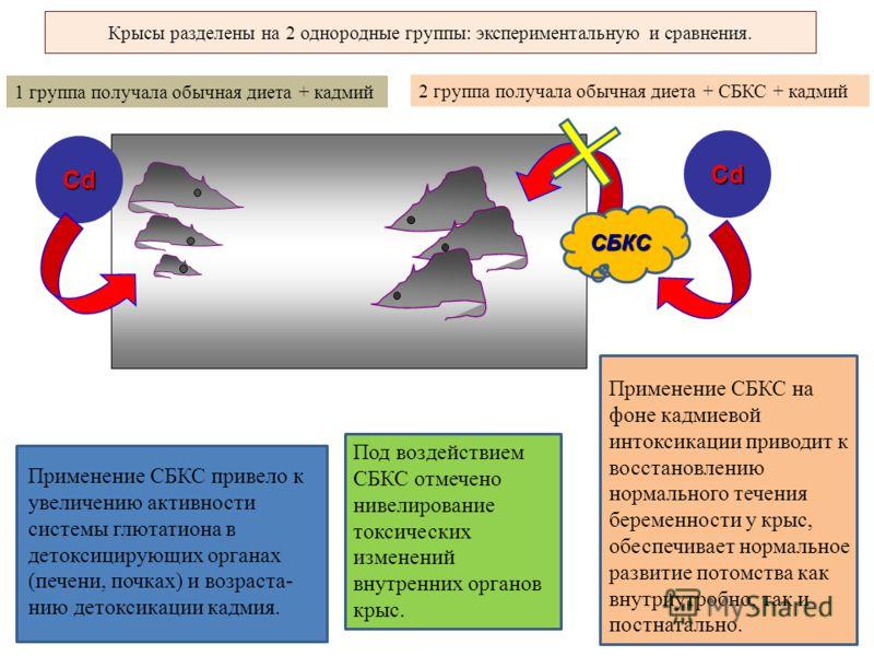 Cd Крысы разделены на 2 однородные группы: экспериментальную и сравнения. Cd 2 группа получала обычная диета + СБКС + кадмий 1 группа получала обычная диета + кадмий СБКС Применение СБКС привело к увеличению активности системы глютатиона в детоксицир