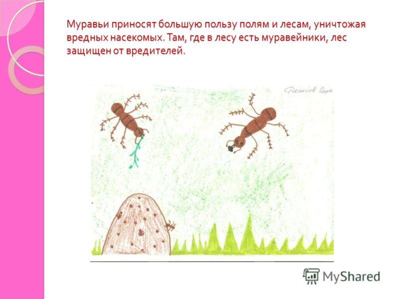 Муравьи приносят большую пользу полям и лесам, уничтожая вредных насекомых. Там, где в лесу есть муравейники, лес защищен от вредителей.