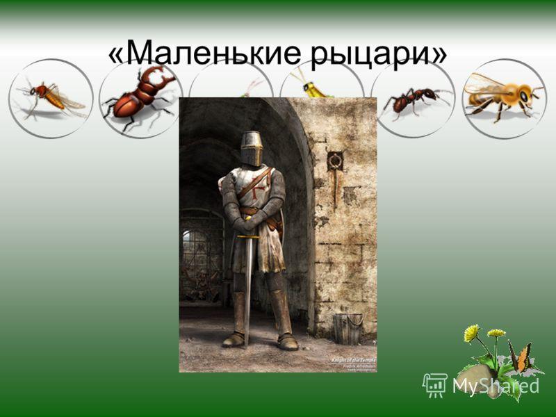 «Маленькие рыцари»