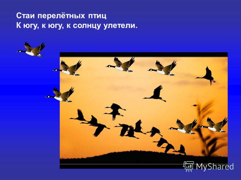 Стаи перелётных птиц К югу, к югу, к солнцу улетели. Стаи перелётных птиц К югу, к югу, к солнцу улетели.