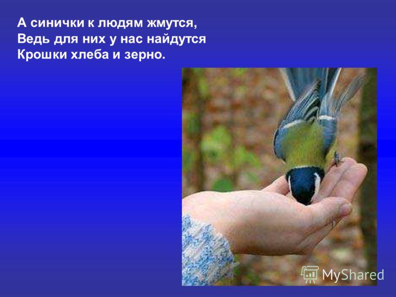А синички к людям жмутся, Ведь для них у нас найдутся Крошки хлеба и зерно. А синички к людям жмутся, ведь для них у нас найдутся крошки хлеба и зерно.