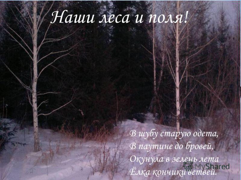 Ночи в лесу Холодны и темны. Снятся деревьям Тревожные сны. Машут ветвями Осины и ели, Мечутся, стонут, Как люди в постели. И, пробудясь В зоревые час, Плачут от счастья Слезами Росы. Наши леса и поля! В шубу старую одета, В паутине до бровей, Окунул