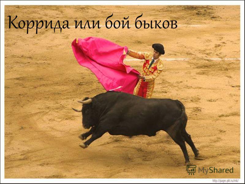 Коррида или бой быков