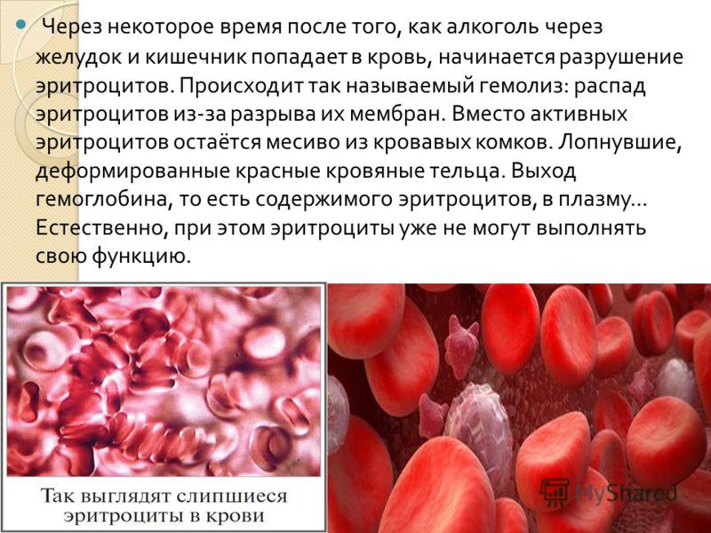 Через некоторое время после того, как алкоголь через желудок и кишечник попадает в кровь, начинается разрушение эритроцитов. Происходит так называемый гемолиз : распад эритроцитов из - за разрыва их мембран. Вместо активных эритроцитов остаётся месив