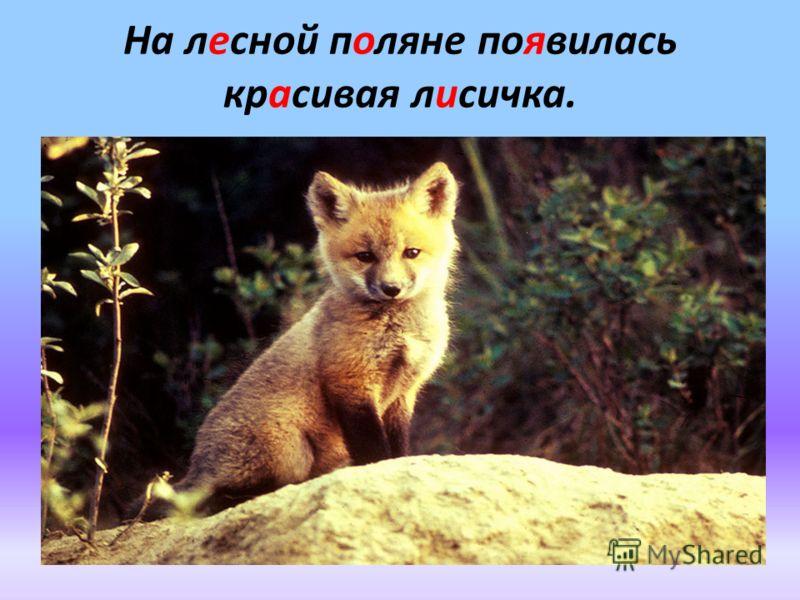 На лесной поляне появилась красивая лисичка.