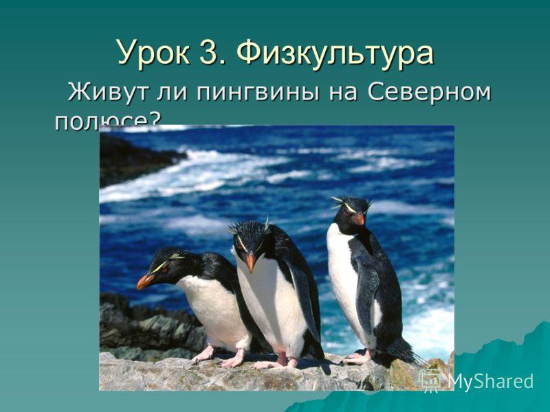 Урок 3. Физкультура Живут ли пингвины на Северном полюсе? Живут ли пингвины на Северном полюсе?