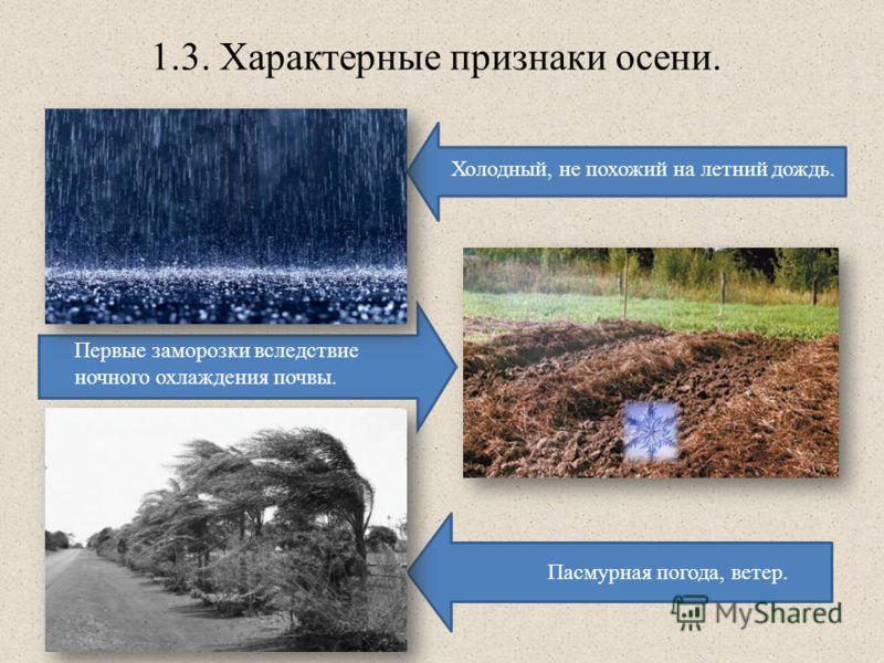 1.3. Характерные признаки осени. Холодный, не похожий на летний дождь. Первые заморозки вследствие ночного охлаждения почвы. Пасмурная погода, ветер.