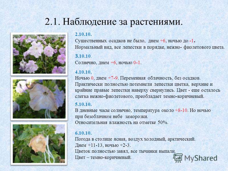 2.1. Наблюдение за растениями. 2.10.10. Существенных осадков не было, днем +6, ночью до -1. Нормальный вид, все лепестки в порядке, нежно- фиолетового цвета. 3.10.10. Солнечно, днем +6, ночью 0-1. 4.10.10. Ночью 0, днем +7-9. Переменная облачность, б