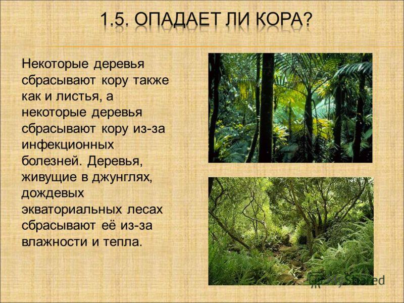 . Некоторые деревья сбрасывают кору также как и листья, а некоторые деревья сбрасывают кору из-за инфекционных болезней. Деревья, живущие в джунглях, дождевых экваториальных лесах сбрасывают её из-за влажности и тепла.
